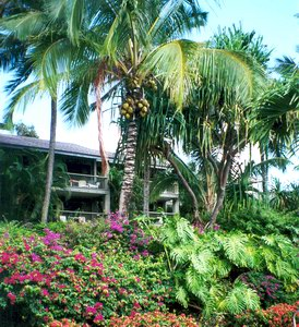View details: Hanalei Bay Resort